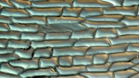 Las Paredes Celulares Y Orgánulos De Células De La Epidermis Escala ...