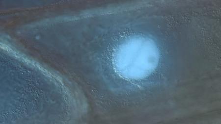 epiderme: la paroi cellulaire, le noyau et d'organites des cellules de l'�piderme � l'�chelle du bulbe d'oignon