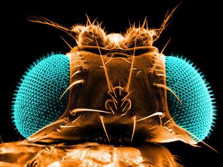 Portrait of a fruit fly, Drosophila melanogaster, scanning electron microscopy Reklamní fotografie