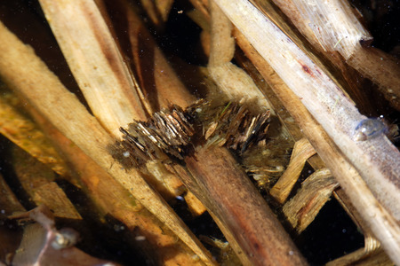 seeps: Caddisflies have aquatic larvae and are found in a wide variety of habitats such as streams, rivers, lakes, ponds, spring seeps, and temporary waters. Stock Photo