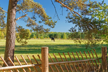Landscape with Horse: a view from a Setomaa farm yard.