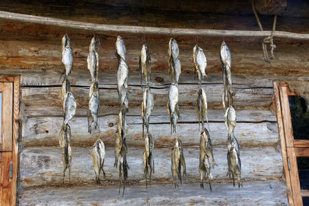 ethnography: Drying fish on the wall of a wooden house in Setomaa, a region in southern Estonia.