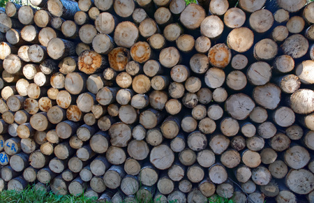 lumber industry: Aspen timber, ready for transport from forest