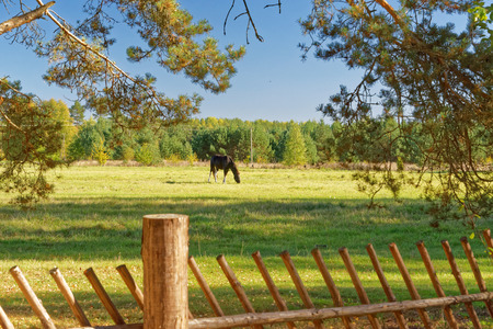 rustical: Landscape with Horse: a view from a Setomaa farm yard.