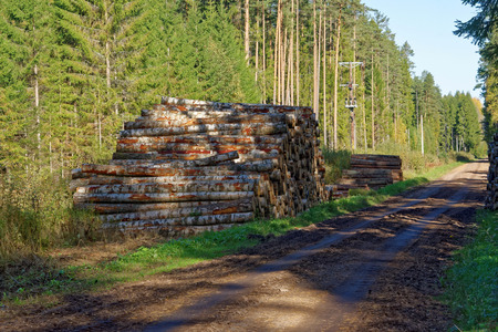Aspen timber, ready for transport from forest