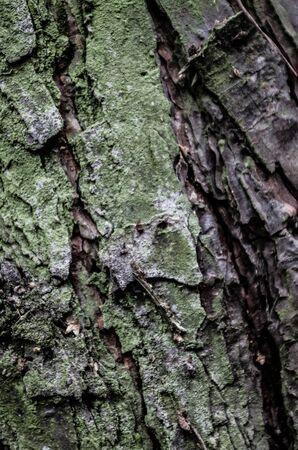 bark texture detail