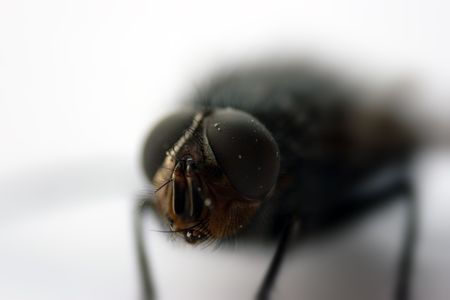 exasperation: macro shoot fly
