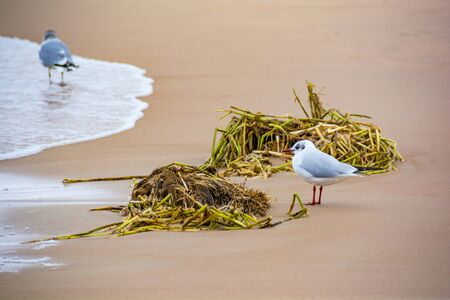 Two seagulls on the shoreline