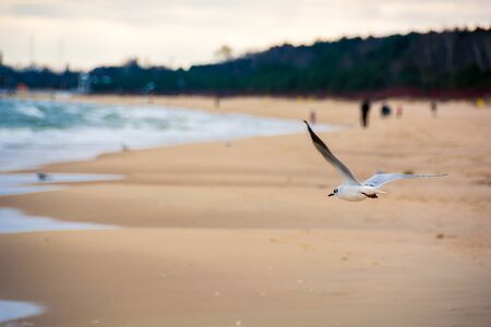 Seagull on the background of the beach