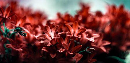 Panoramic view of red Campanula flowers macro