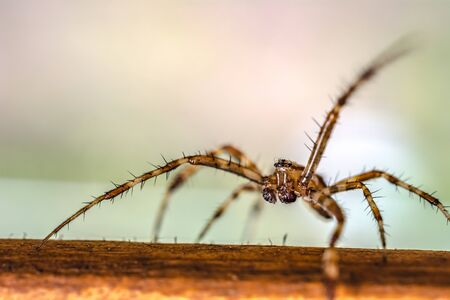 Photo of spider macro walking on a wooden board with bokeh background