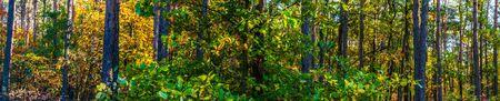 Panoramablick auf den Wald im Herbst