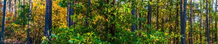 Vue panoramique sur la forêt en automne