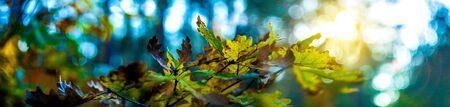 Panoramic view of autumnal colorful leaves macro Standard-Bild - 138872324