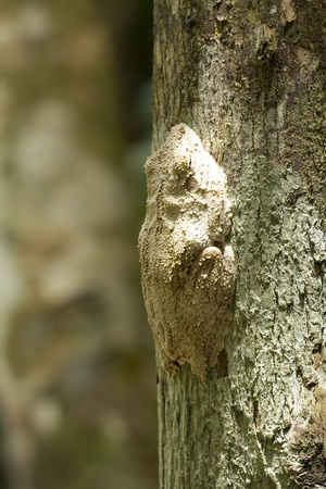 camouflaged: a frog camouflaged in a tree