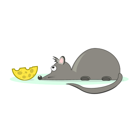 A little gray mouse and cheese