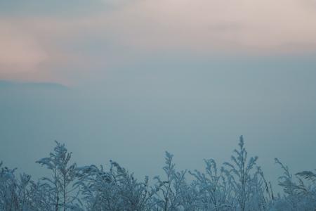 Winter gefrorene Pflanzen im Nebel Standard-Bild