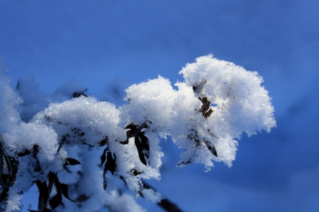 Group of trees, covered with a thick layer of snow  Stock Photo