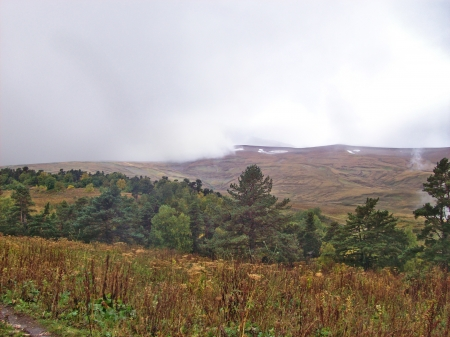 Green trees on a background of mountain slopes covered with withered grass and fog