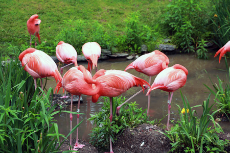 Flamingos are sleeping