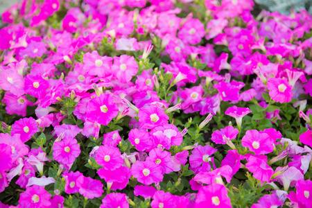 Beautiful pink flowers close up. Stock Photo