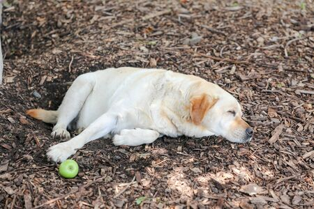 Dog sleeping at backyard - Image