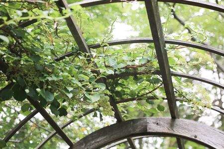 Garden Canopy at the park - Image 写真素材