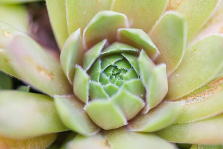 Sharp pointed agave plant leaves - Image