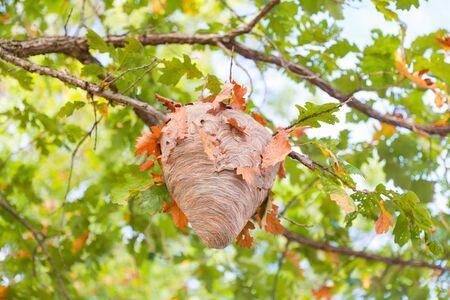 Beecomb on tree - Image Standard-Bild