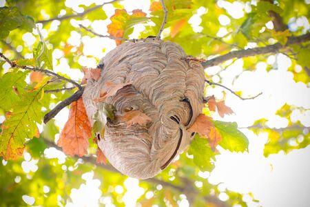 Beecomb on tree - Image 写真素材