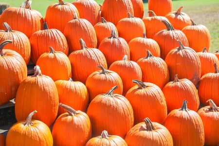 Orange pumpkins at outdoor farmer market. pumpkin patch. Copy space for your text - Image 写真素材 - 132383686