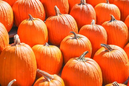 Orange pumpkins at outdoor farmer market. pumpkin patch. Copy space for your text - Image 写真素材 - 132383687
