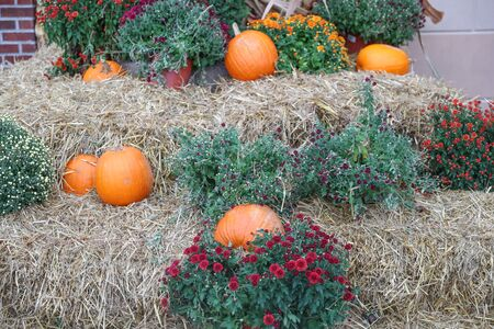 Halloween pumpkins and decorations outside a house - Image 写真素材 - 132383693