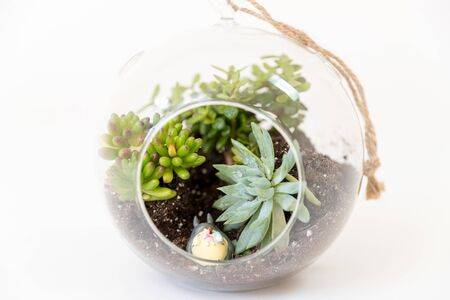 variety succulents round glass terrariums image