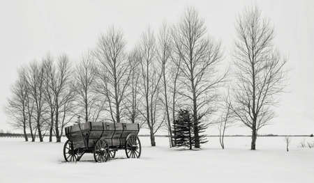 old wood farm wagon: horizontal black and white image of a beautiful winter scene of an old wood  farm wagon with wooden wheels  sitting on a blanket of snow along a row of bare trees. Stock Photo