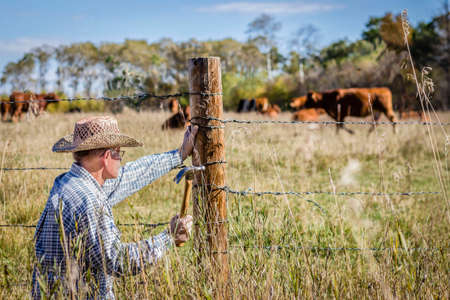 crouch: horizontal image in a rural setting of a farmer crouched down to fix his barb wire fence with cows grazing in the background on a warm summer day Stock Photo