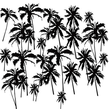 palmetto: Set tropical palm trees with leaves, mature and young plants, black silhouettes isolated on white backgroun