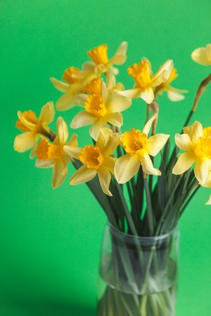 Yellow narcissus or daffodil flowers on green background. Selective focus. Place for text.Flowers background