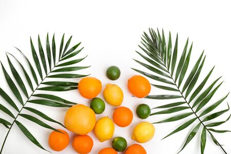 Citrus fruits - orange, lemon, grapefruit, lime and palm leaves on white background.