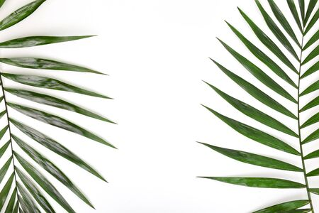 Tropical palm leafs on white background. Flat lay