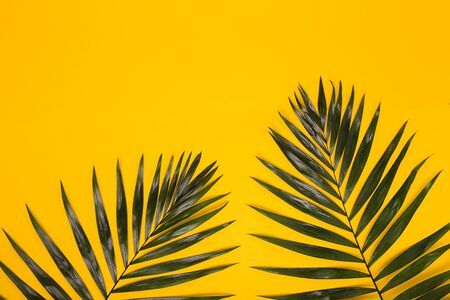 Green tropical leaves on yellow background. Summer creative flat lay.