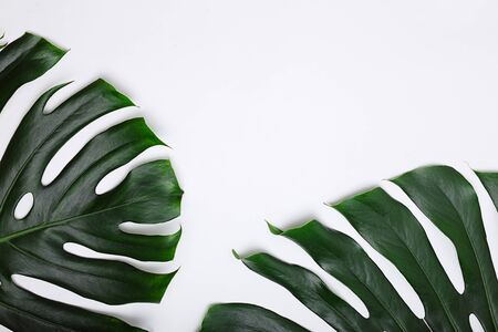 Tropical green palm leafs on white background. Flat lay