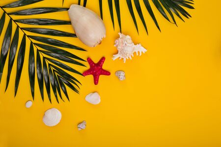 Tropical bright yellow background with sea shells and starfish