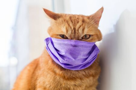 Angry ginger cat in medical protective mask on a window. Protection against viruses and bacteria concept, veterinary medicine and treatment of pets