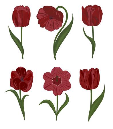 bunch flowers: Set of tulip flowers.