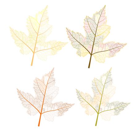 infirm: Maple leaves autumn colors.Vector illustration. EPS 10 Illustration