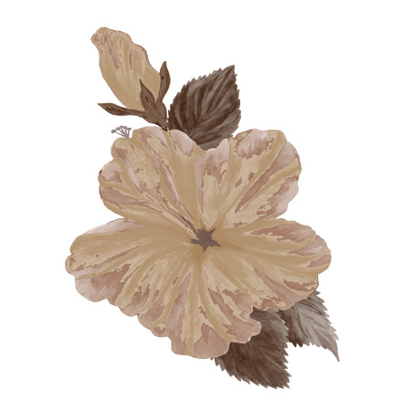 isolated flower: Watercolor hibiscus flower. Tropical hibiscus in, isolated on white.vector.EPS 10