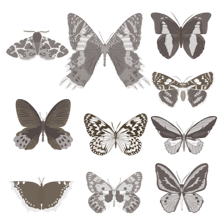 Set of butterflies. Vector illustration