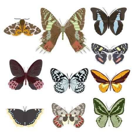 Set of butterflies. Vector illustration