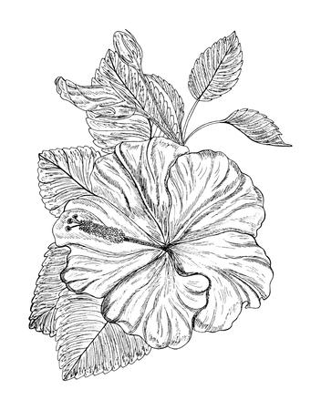 Beautiful hibiscus flower. Vector illustration. EPS 10